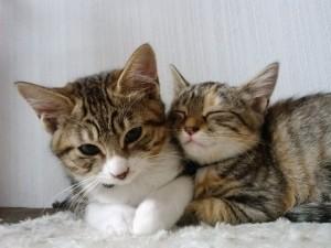 猫の親子のにおいで安心