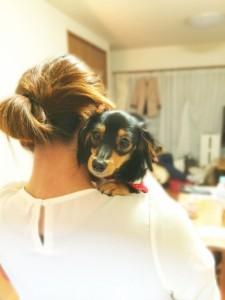 ペットといつまでも気分よく一緒にいるためににおいの悩み対策