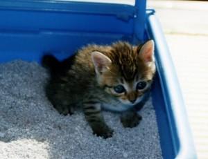 システムトイレの砂を見直して猫のにおい対策