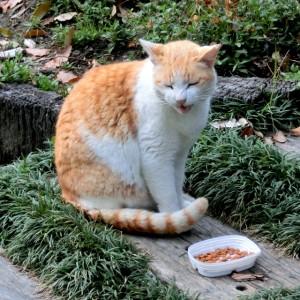 キャットフードの片づけで猫のにおい対策