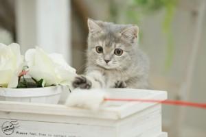 猫と良く遊びお互いストレスを溜めないこともにおい対策。