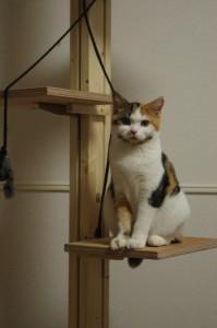 キャットタワーで猫のストレスを除きスプレー行動防止でにおい対策