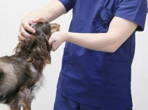 動物病院での診察